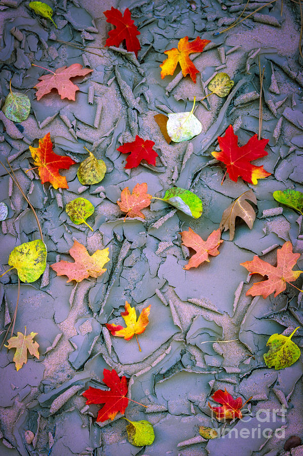 America Photograph - Cracked Mud And Leaves by Inge Johnsson