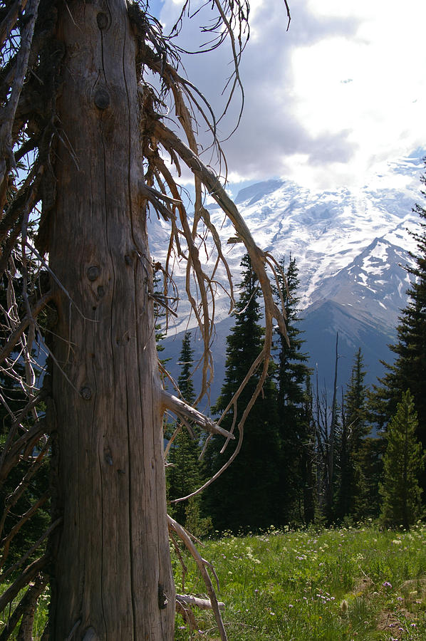 Glacier Photograph - Craggy Mountain Tree by Christine Burdine