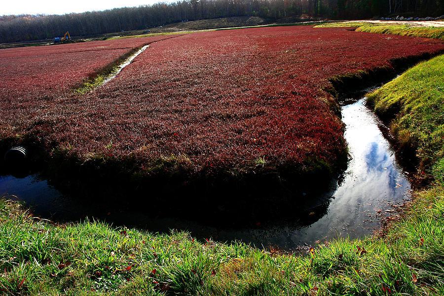 Cranberry Bog Photograph By David Decenzo