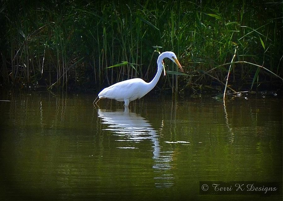 Crane Photograph - Crane by Terri K Designs