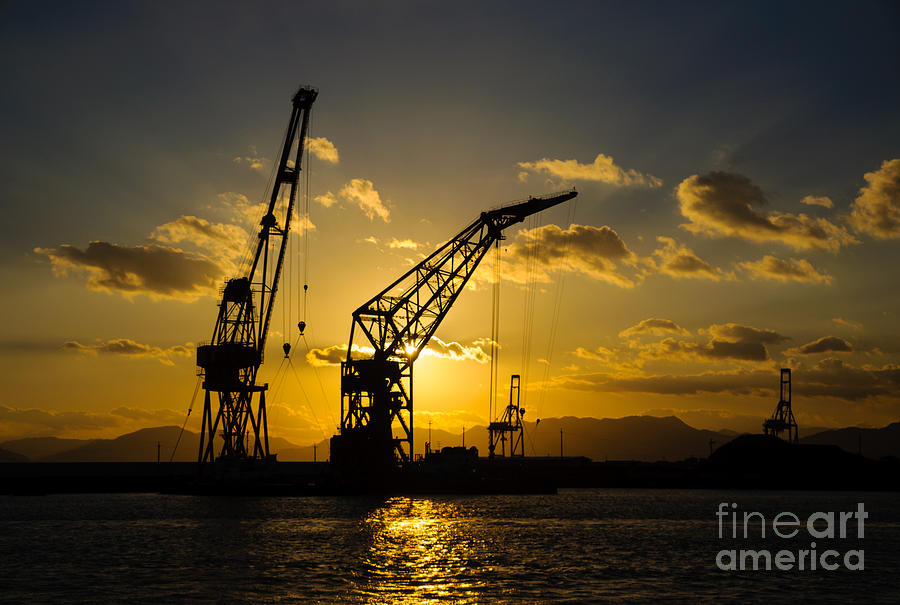 Sunset Photograph - Cranes In The Sunset by David Hill