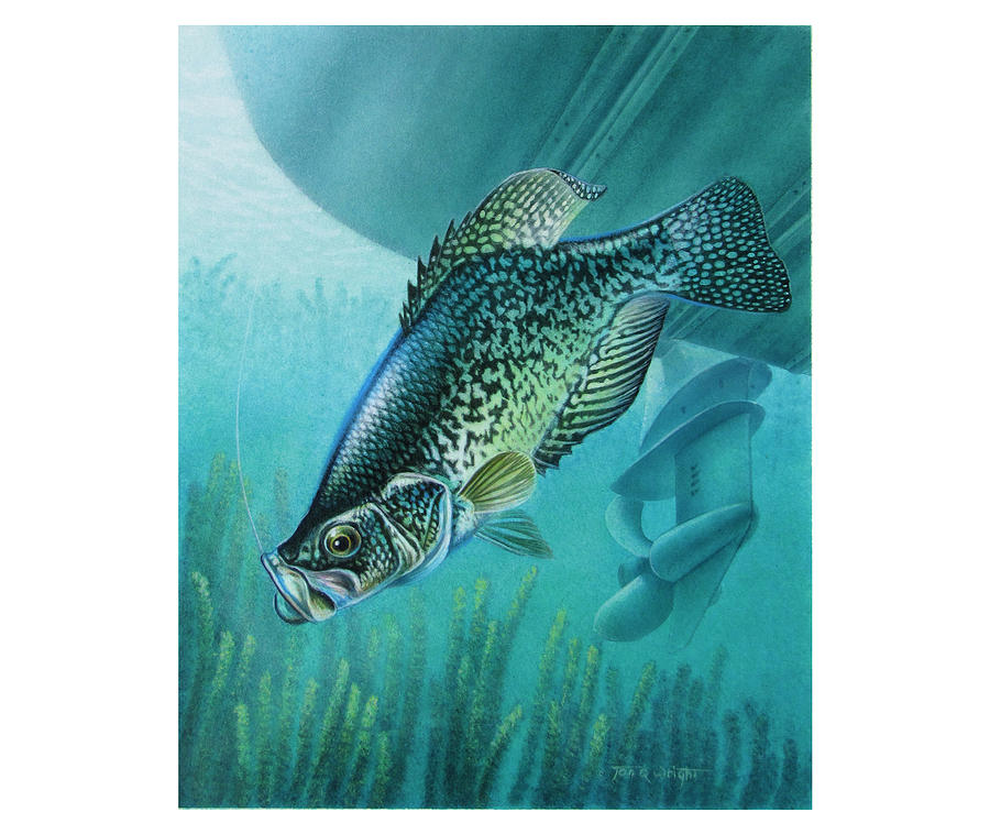 Jon Q Wright Painting - Crappie And Boat by JQ Licensing