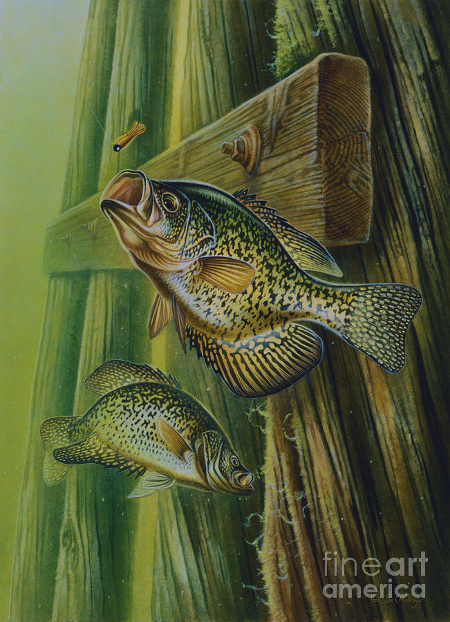Jon Q Wright Painting - Crappie And Bridge Support by Jon Q Wright