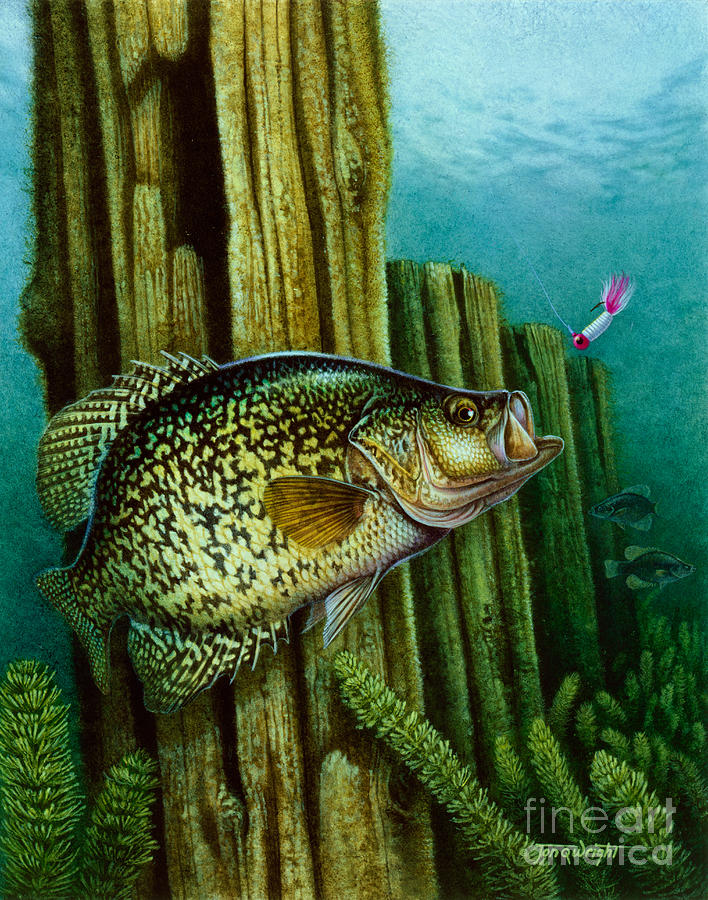 Jon Q Wright Painting - Crappie And Posts by Jon Q Wright