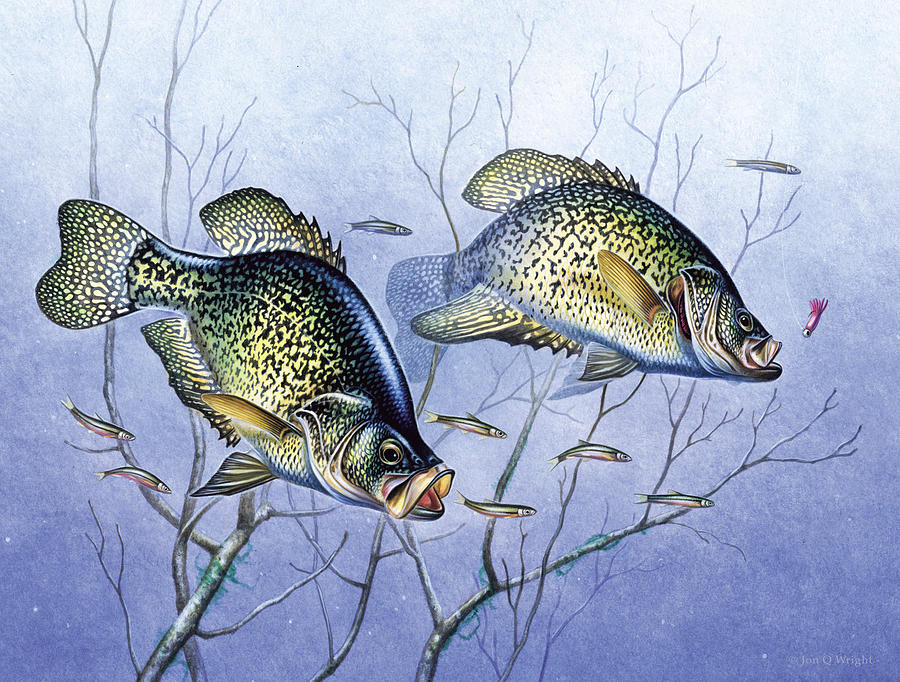 Jon Q Wright Painting - Crappie Brush Pile by JQ Licensing