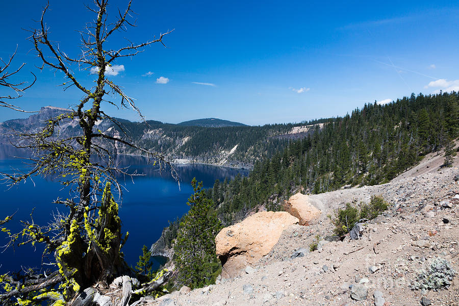 Caldera Photograph - Crater Lake And Moss Covered Tree by Dan Hartford