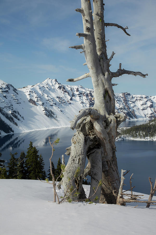 Crater Lake National Park Photograph by Bob Pool