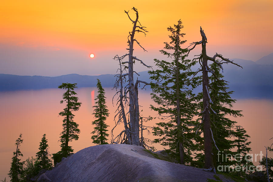 America Photograph - Crater Lake Trees by Inge Johnsson