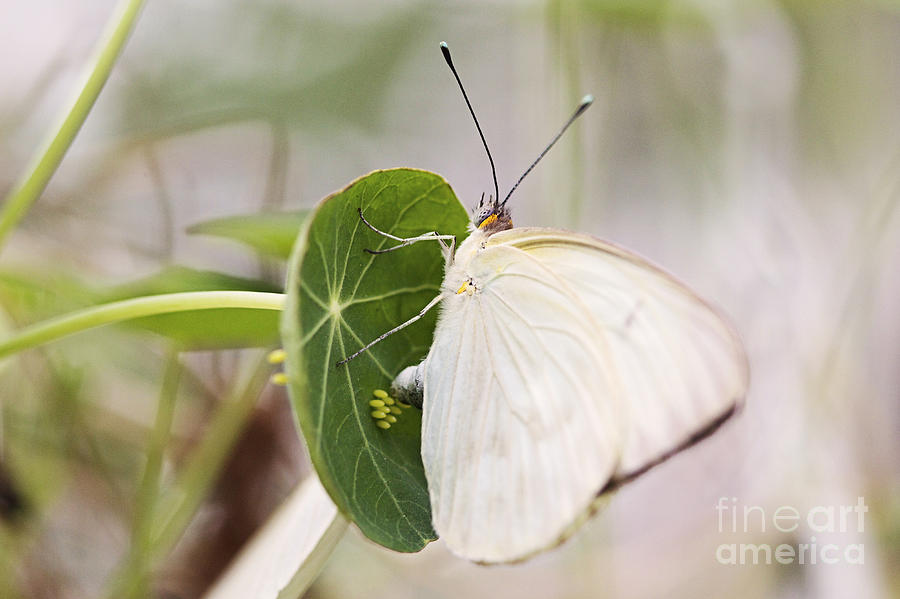 Butterfly Photograph - Creating Life by Pamela Gail Torres