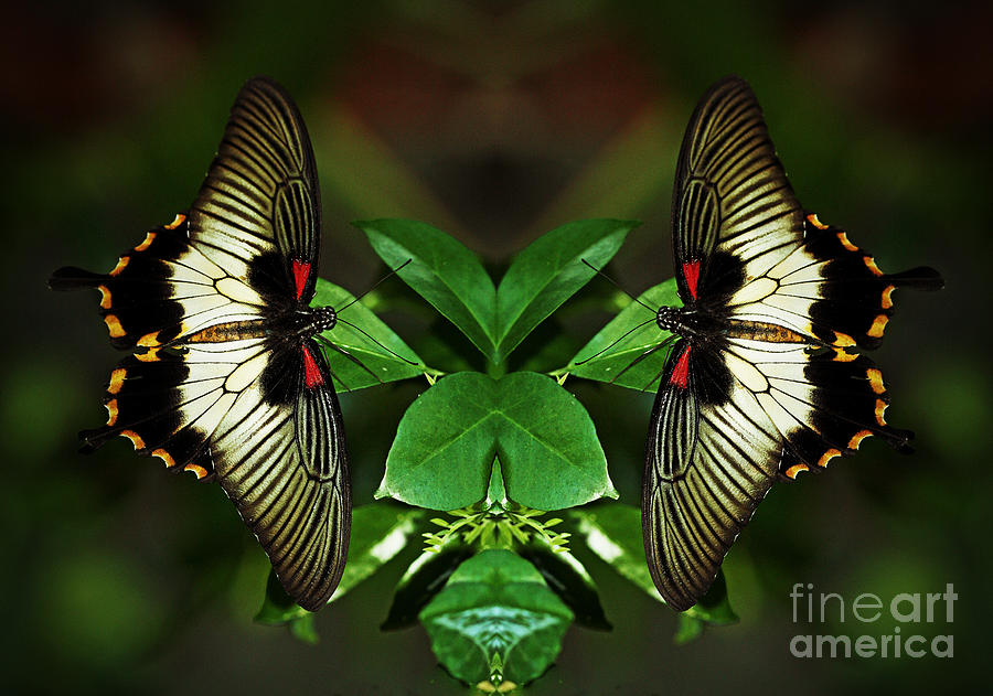 nature creative reflection inspired photograph fine butterflies photographs 29th which july uploaded