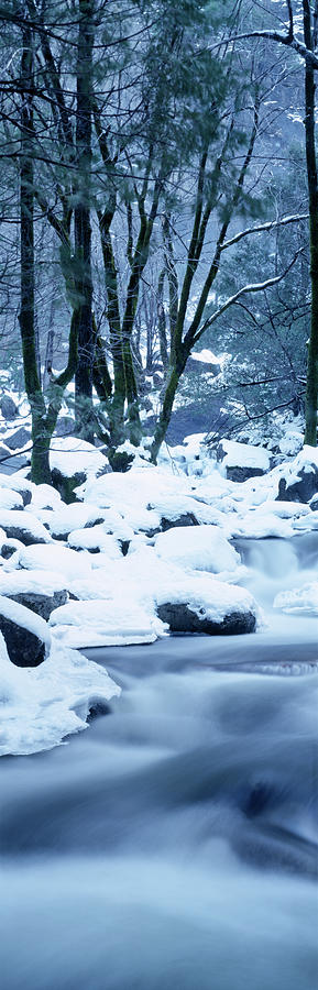 Vertical Photograph - Creek Flowing Through Forest In Winter by Panoramic Images