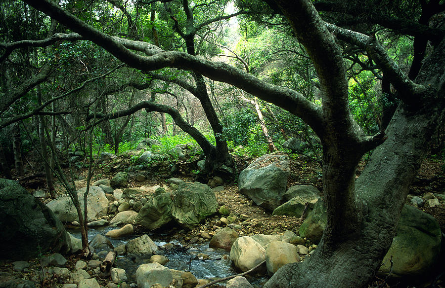 Landscape Photograph - Creek In Woods by Kathy Yates