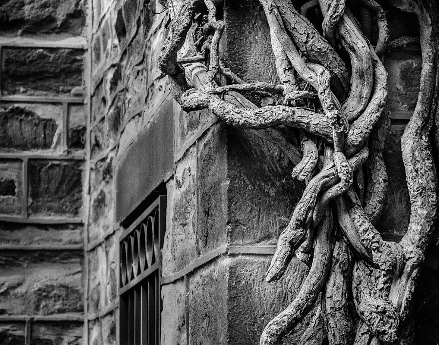 Black And White Photograph - Creeper by Steve Stanger