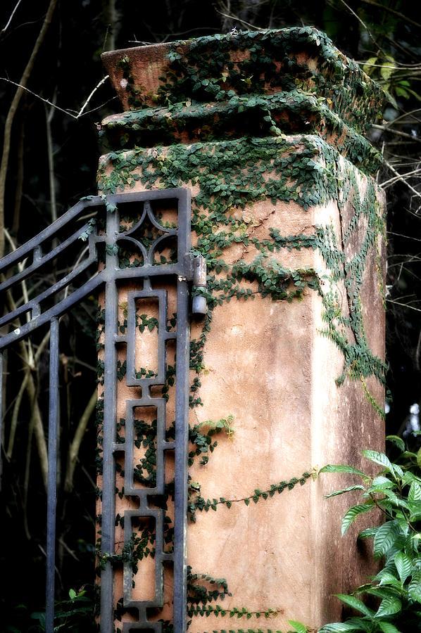 Gate Photograph - Creeping Fig by Tara Miller
