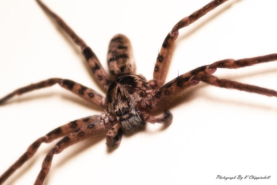 Spiders Photograph - Creepy 01 by Kevin Chippindall
