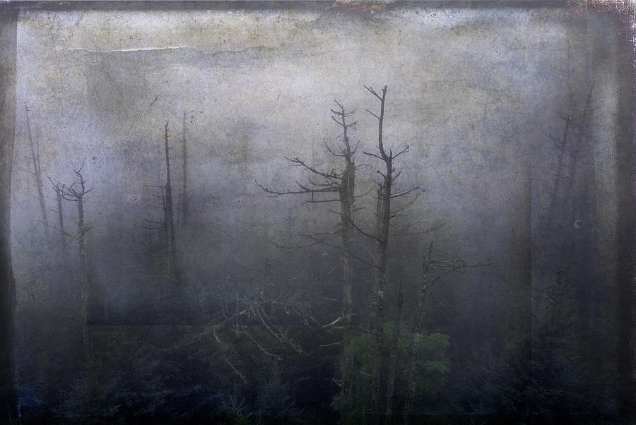 Creepy Forest by Carol Erikson