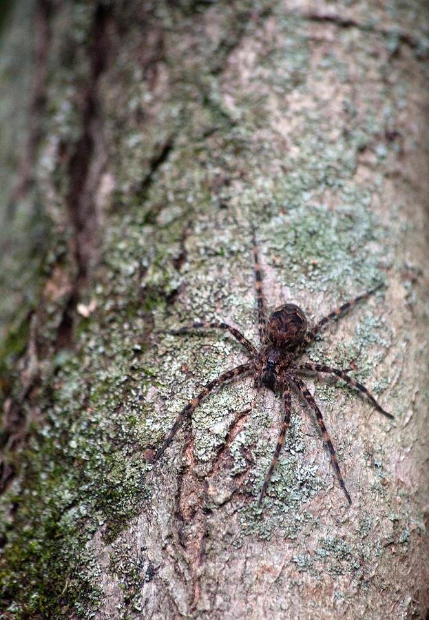 Spider Photograph - Creepy Spider by Karol Livote