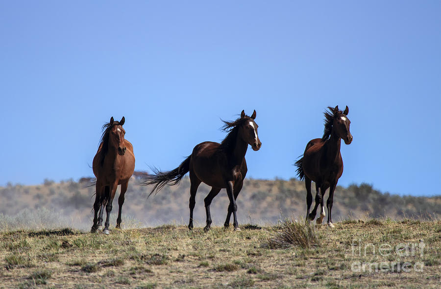 Mustangs Photograph - Cresting The Ridge by Mike  Dawson