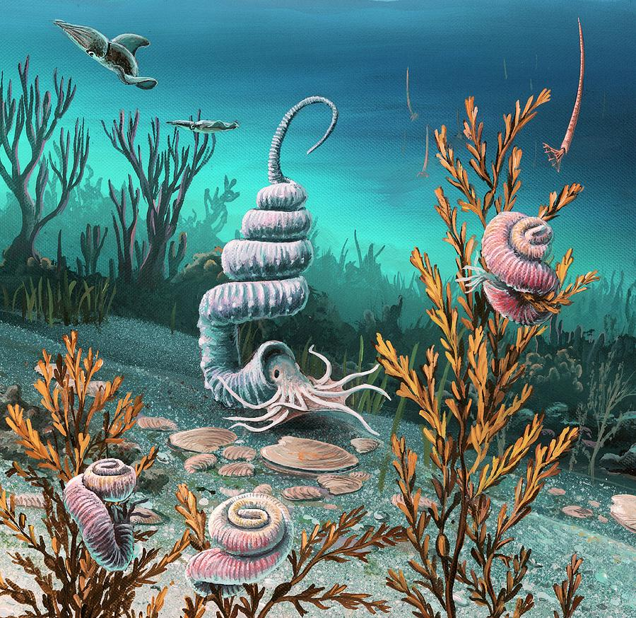 Cretaceous Heteromorph Ammonites Photograph By Richard Bizley
