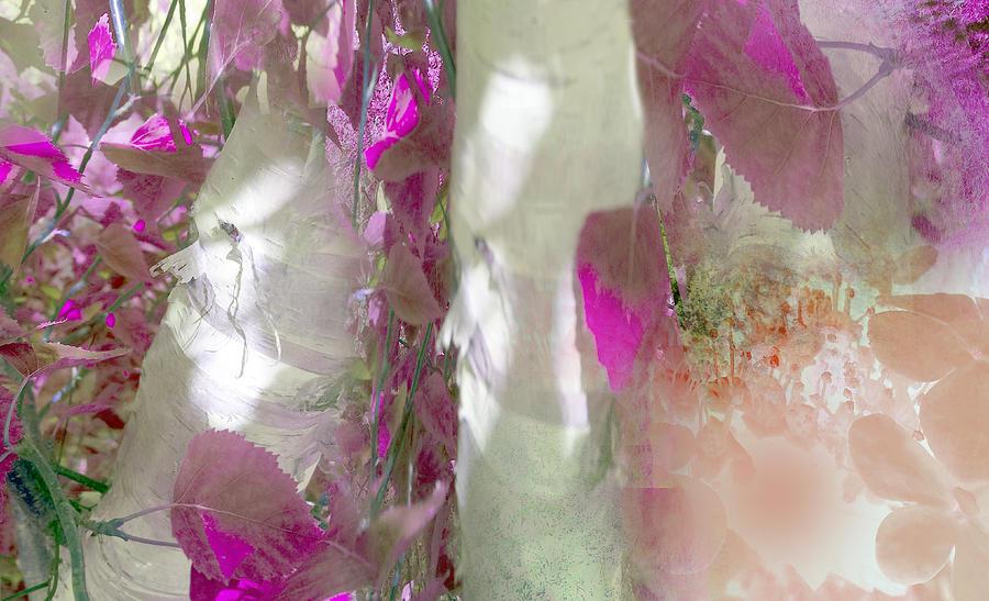 Abstract Photograph - Crimson And Silver by Davina Nicholas