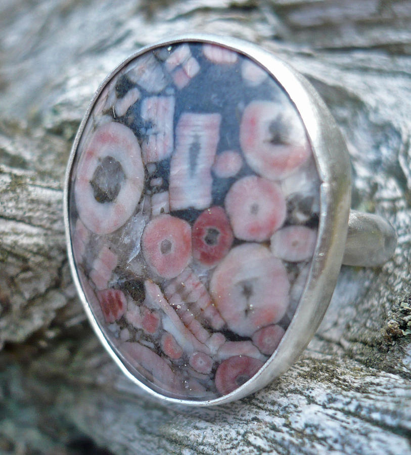 Fossil Jewelry - Crinoid Fossil Ring by Arianna Bara