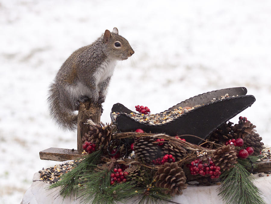 Animal Photograph - Critter Christmas by Marty Maynard
