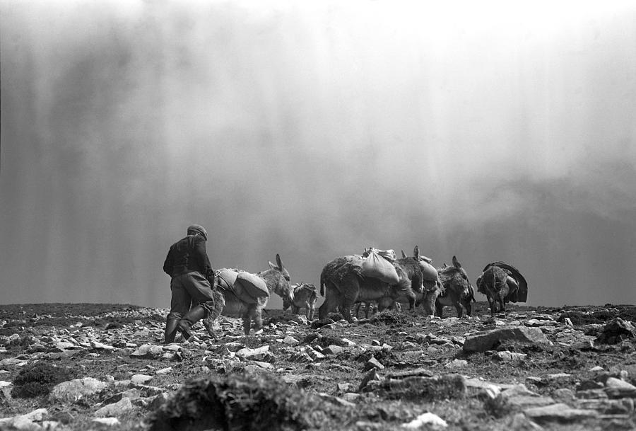 Donkeys Photograph - Donkey Train On Croagh Patrick by Irish Photo Archive