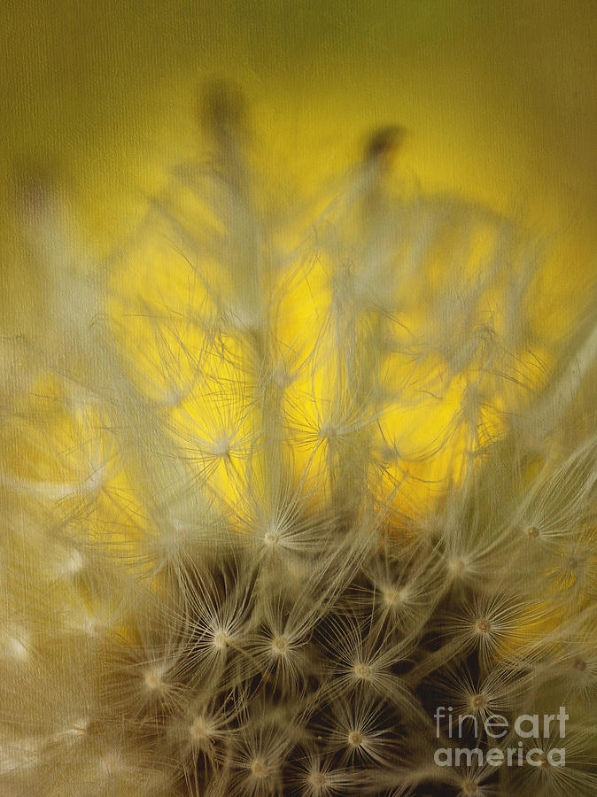Dandelion Abstract Photograph - Crochet Pattern by Irina Wardas