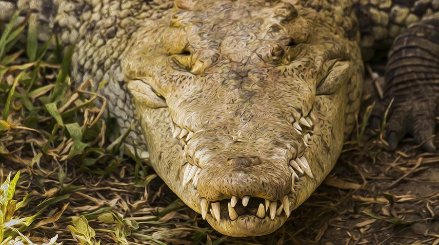 Crocodile Photograph - Crocodile by Aged Pixel