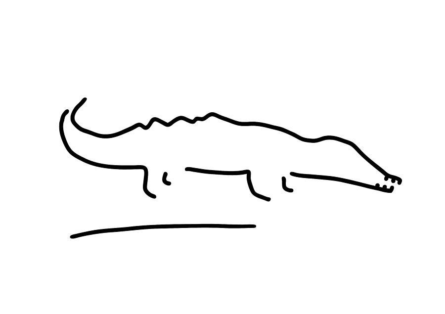 Crocodile Alligator Drawing