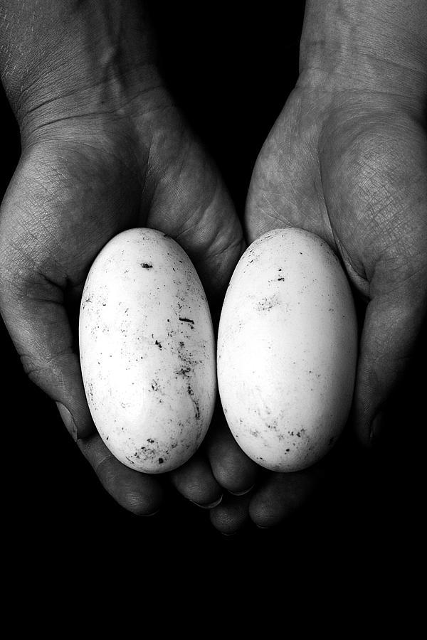 Hand Photograph - Crocodile Eggs by Kim Lagerhem