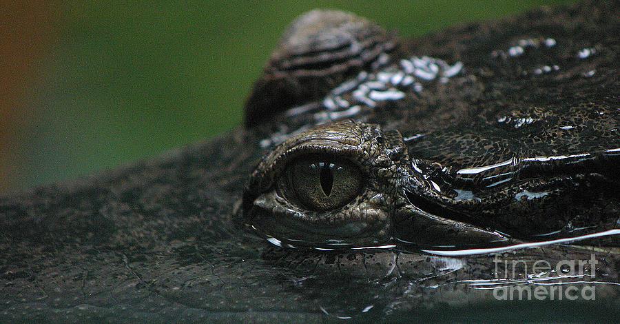 Crocodile Photograph - Crocs Eye-1 by Gary Gingrich Galleries