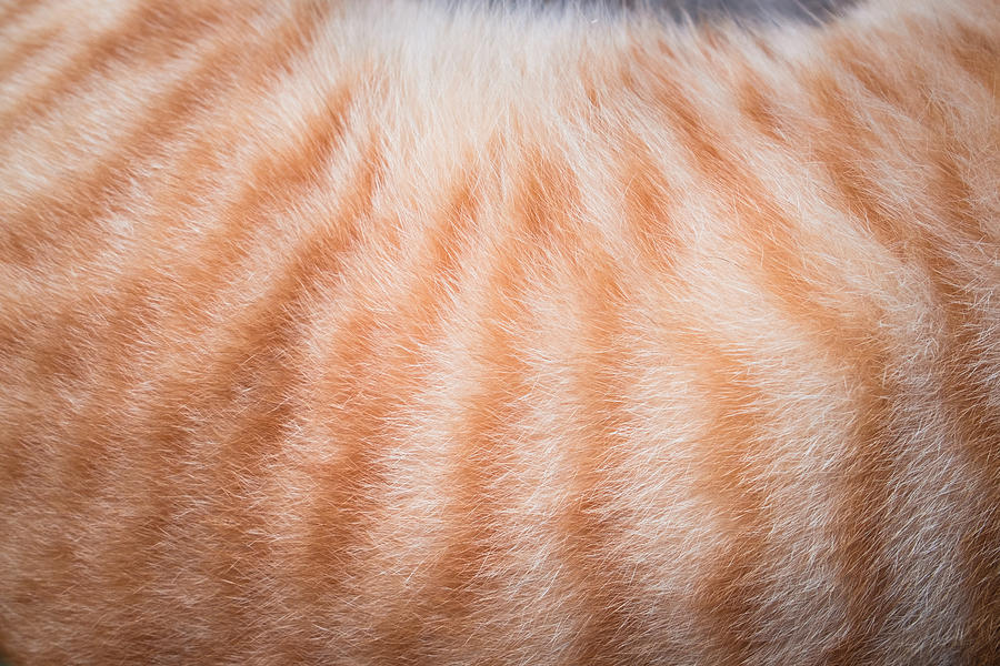 Cropped Image Of Cat Hair Photograph by Ekachai Chobphot / EyeEm