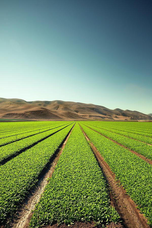 Crops Grow On Fertile Farm Land by Pgiam