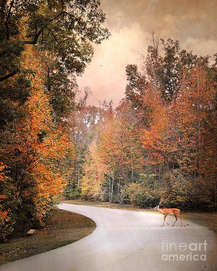 Autumn Photograph - Crossing Over by Jai Johnson