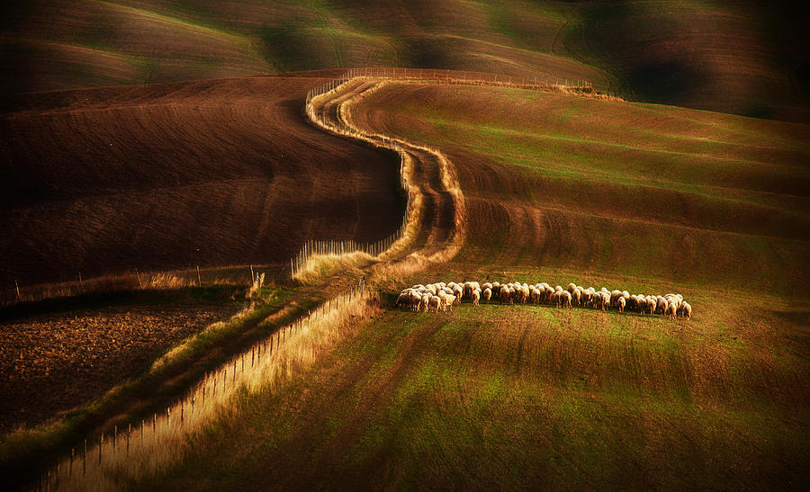 Animals Photograph - Crossing The Fields by