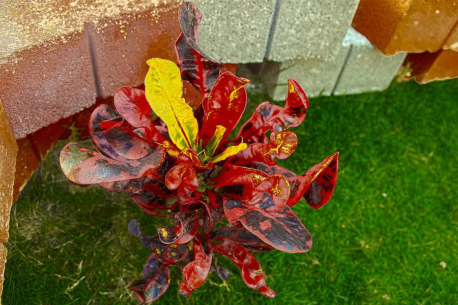 Miniature Photograph - Croton Impressus by Sandra Pena de Ortiz