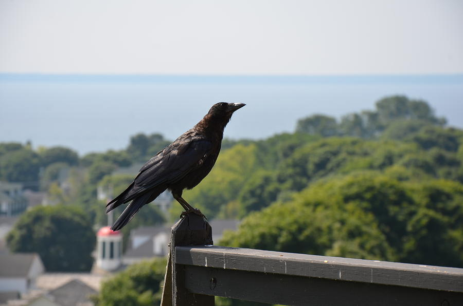 Crow Photograph - Crow by Brett Geyer