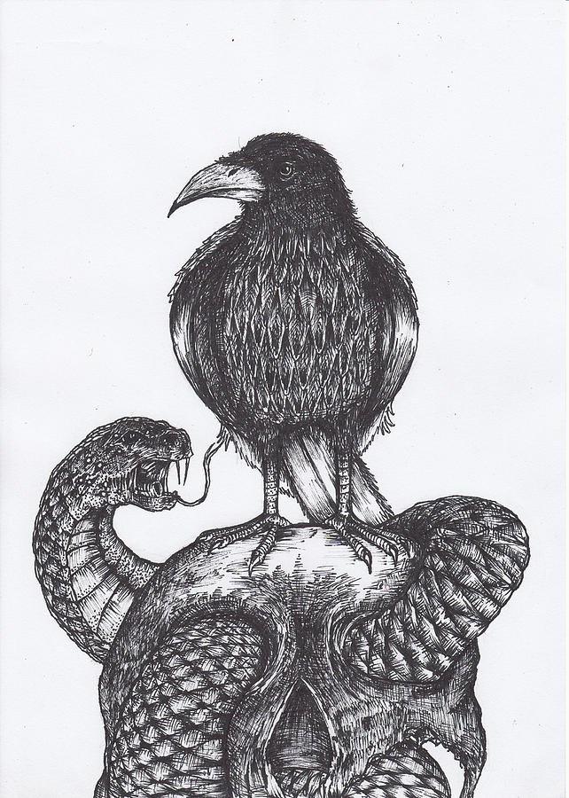 Crow On Skull Drawing By Murni Ch