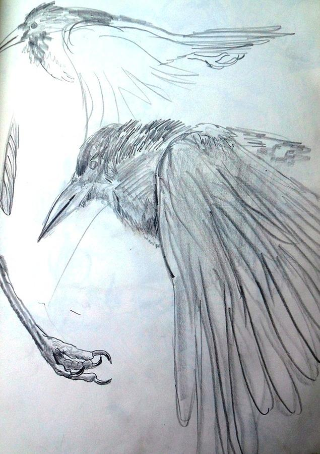 The Crow Painting - Crow Pencil Study by Trudi Doyle