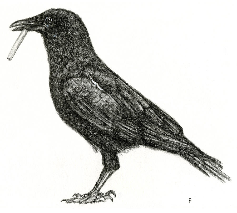 CROW by Penny Collins