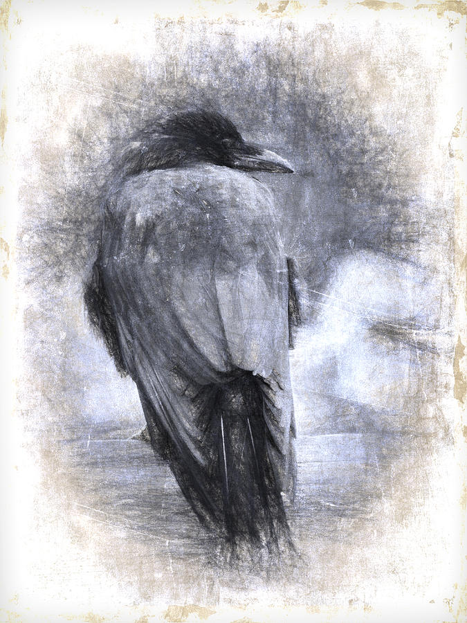 Crow Photograph - Crow Sketch Painterly Effect by Carol Leigh