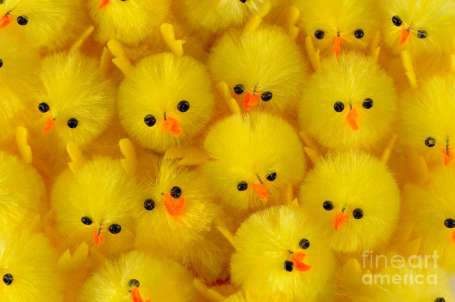 Chick Photograph - Crowded Chicks by Grigorios Moraitis