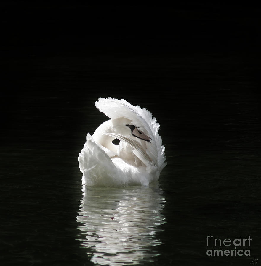 Lake Photograph - Crown Of Feathers IIi by Lynn Jackson