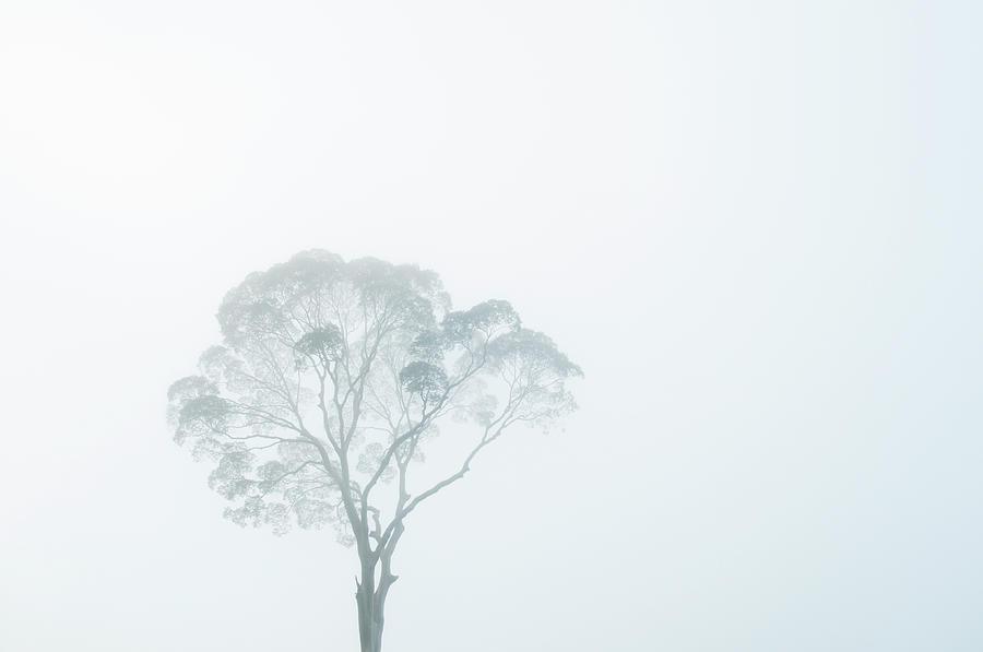 Crown Of Tall Dipterocarp Tree In Photograph by Anders Blomqvist