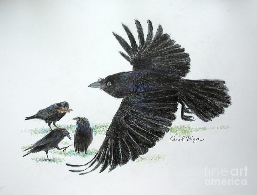 Crows Drawing - Crows by Carol Veiga