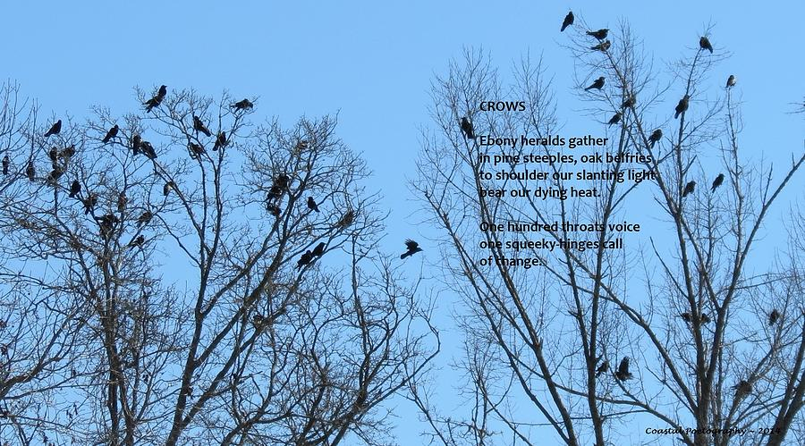 Crows Photograph by Catherine Favole-Gruber