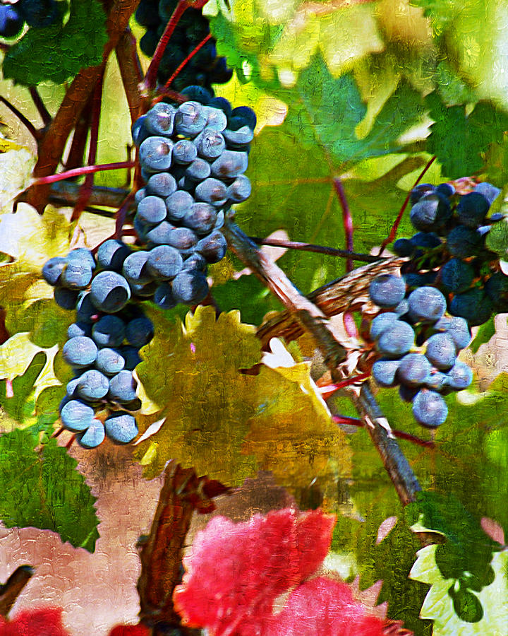 Wine Grapes Digital Art - Crush Me Now I by Ken Evans