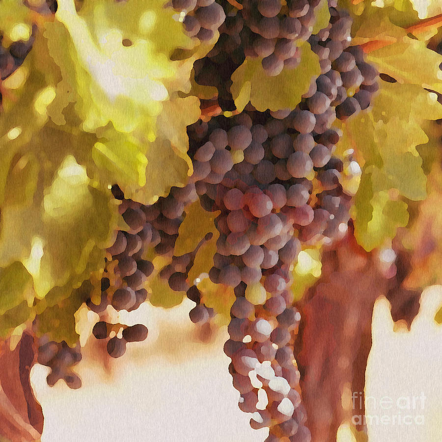 Grapes Drawing - Crush Time by Artist and Photographer Laura Wrede