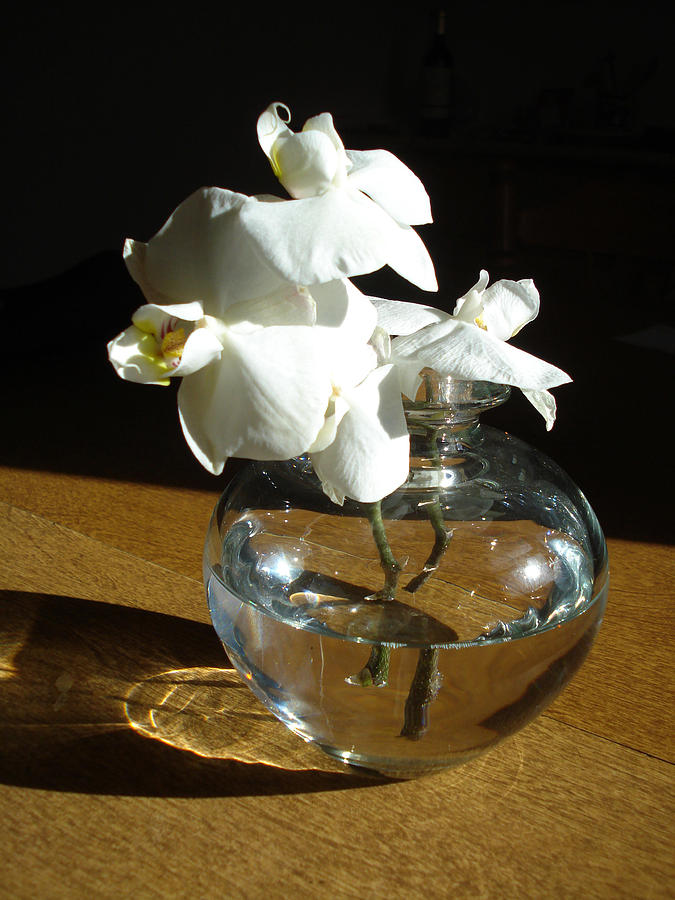 Crystal Clear Vase With White Flower Photograph By